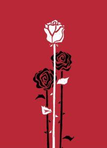 Eine weiße Rose mit langem Stil vor zwei schwarzen Rosen auf rotem Grund